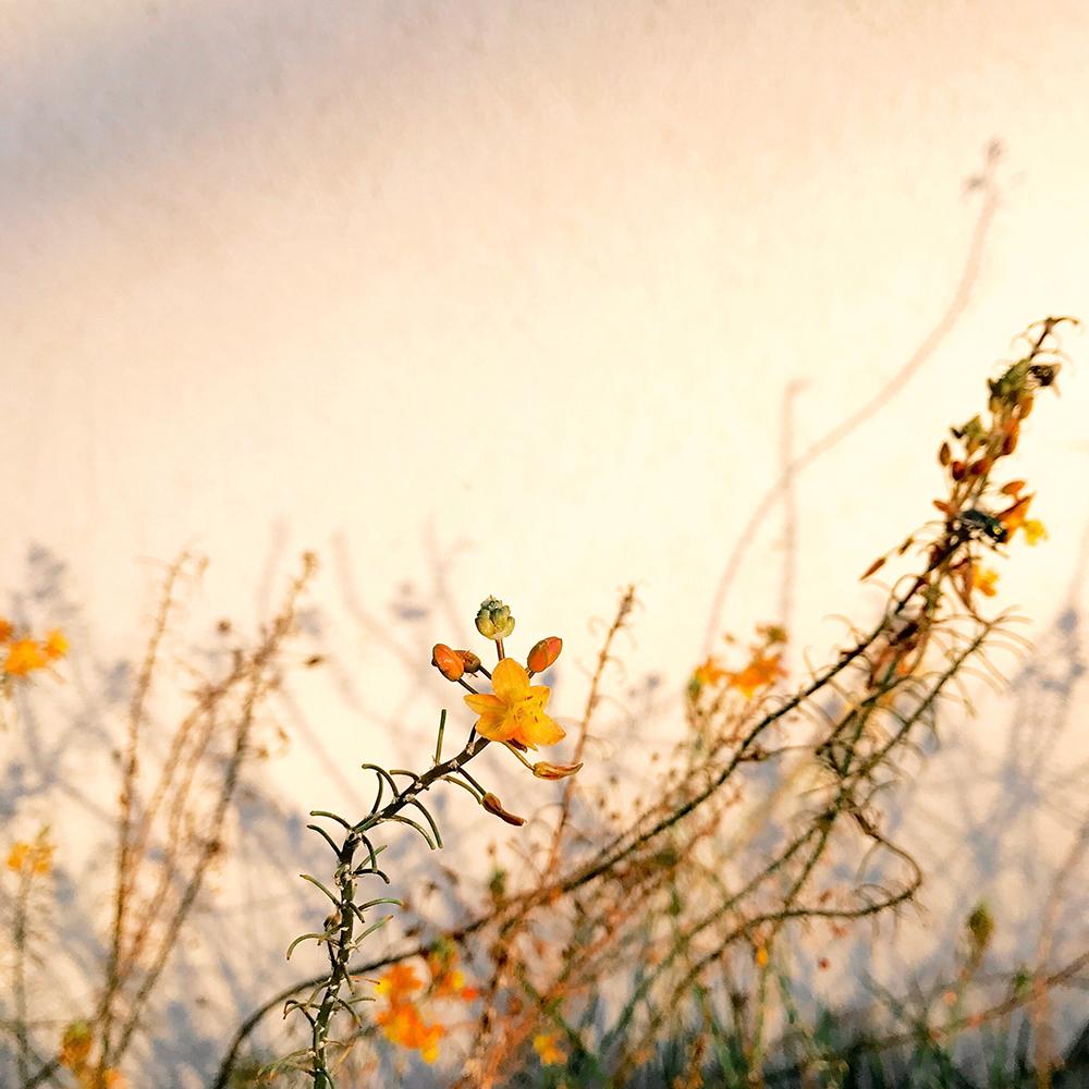 Цветы — 1 место. Элисон Хилена, США