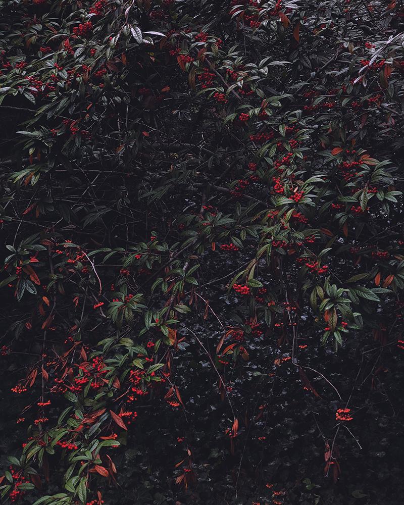Цветы — 2 место. Zhendi Zhang, США
