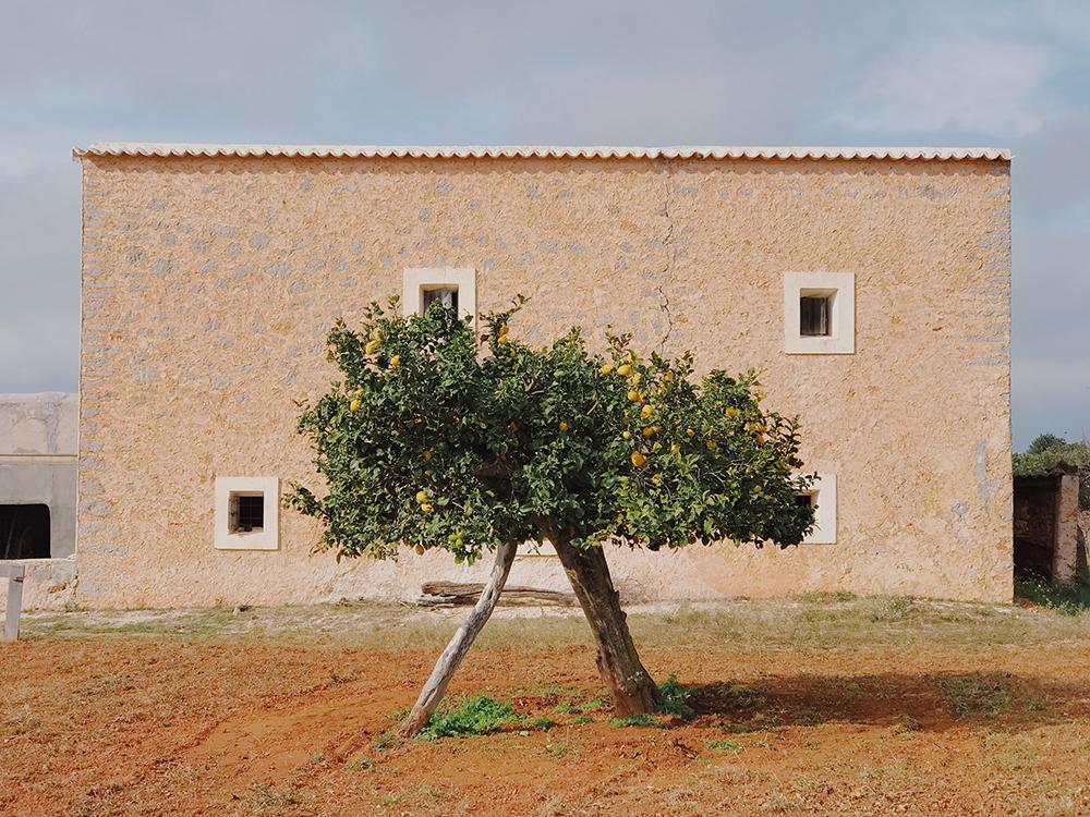Деревья — 3 место. Magdalena de Jonge Malucha, Испания