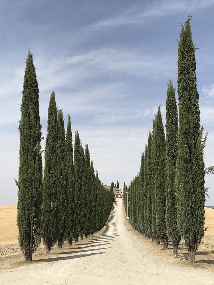 Деревья — 1 место. Lidia Muntean, Румыния