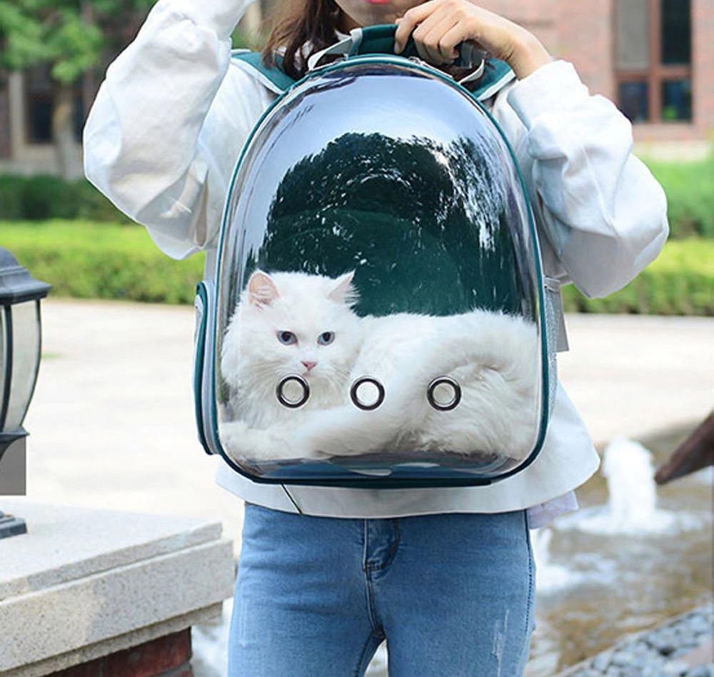 Прозрачный рюкзак для кота